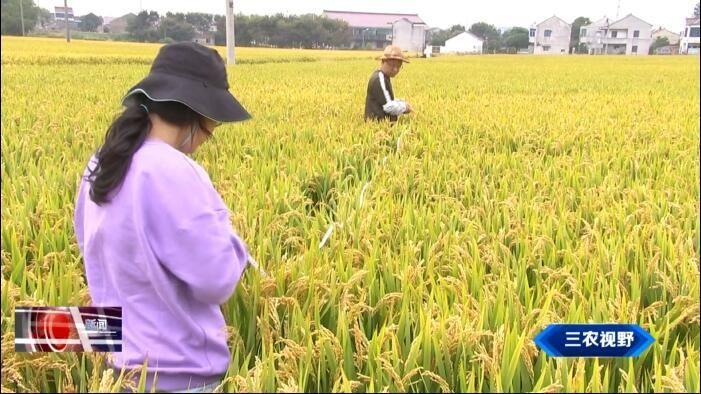 三农视野 2020年金坛省级水稻绿色高质高效创建面积达7.6万亩