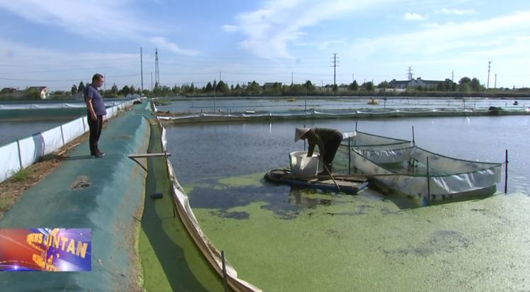 三农视野|长荡湖大闸蟹上市 2021年产量高规格大